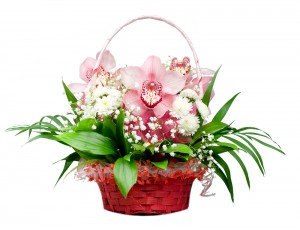Orchids Flowers Delivery