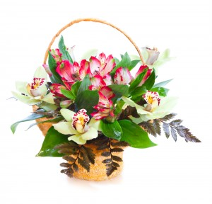 Orchids Baskets